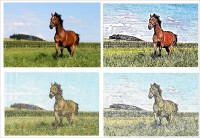 лошадь в фотостежке
